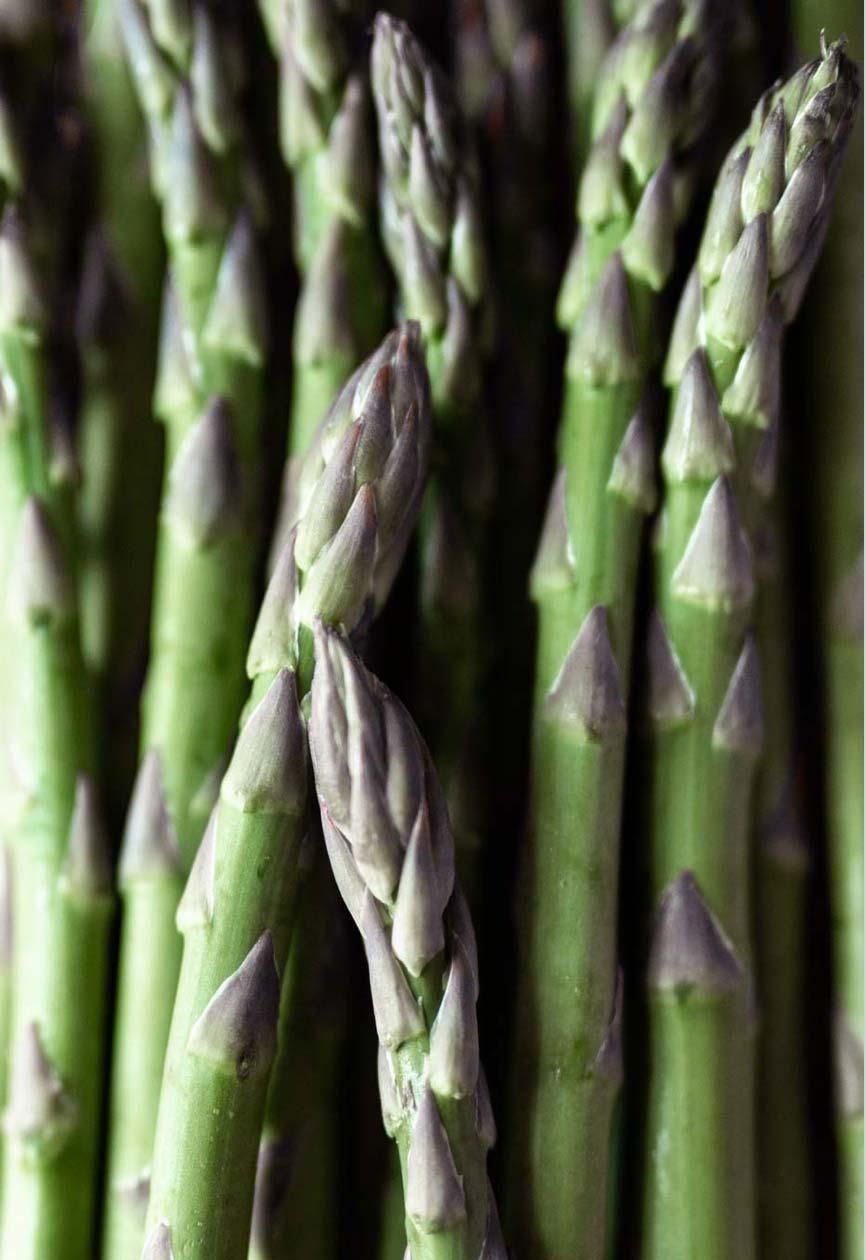 asparagus-camillaskov